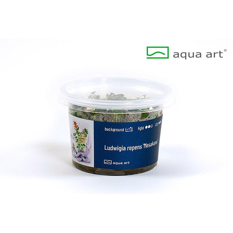 Ludwigia repens Mesakana - in vitro