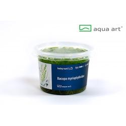 Bacopa myriophylloides - in vitro AquaArt