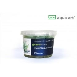 Hygrophila sp. Siamensis - in vitro AquaArt