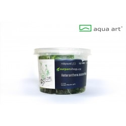Heteranthera zosterifolia - in vitro AquaArt