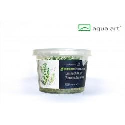 Limnophila scrophulariaceae - in vitro AquaArt