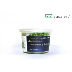 Micranthemum Monte Carlo - in vitro AquaArt