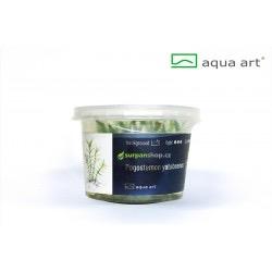 Pogostemon yatabeanus - in vitro AquaArt