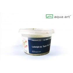 Ludwigia sp. mini Super Red - in vitro AquaArt