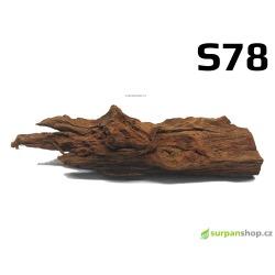 Kořen Mangrove 24cm - S78