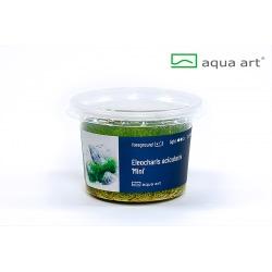 """Eleocharis acicularis """"mini"""" - in vitro AquaArt"""