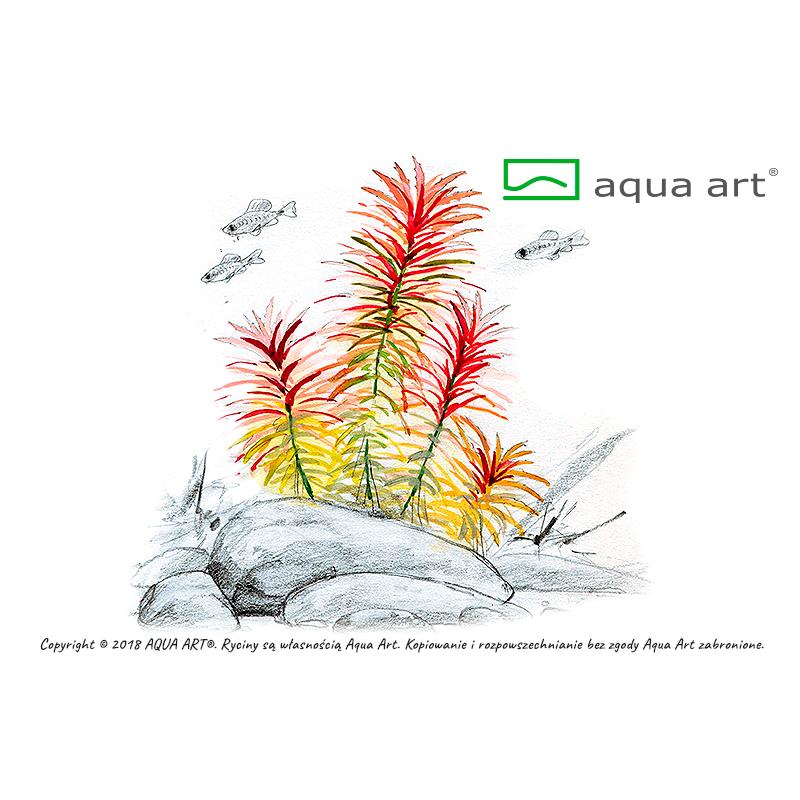 Limnophila aromatica - in vitro AquaArt