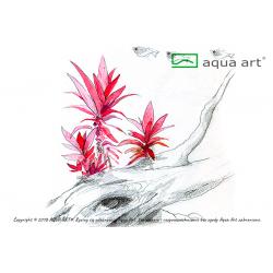 Alternanthera Reineckii Purple - in vitro AquaArt