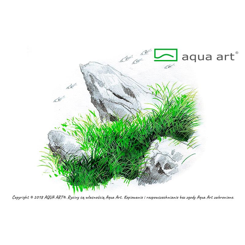 Eleocharis acicularis mini - in vitro AquaArt