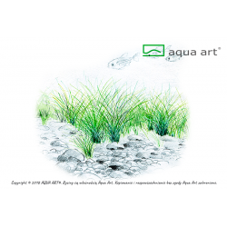 Eleocharis parvula - in vitro AquaArt