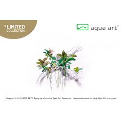 Bucephalandra sp. Aqua Artica - limitovaná edice - in vitro AquaArt