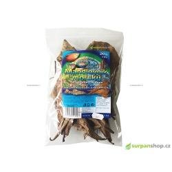 Mandlovník mořský - Terminalia Catappa - 20 g - SURPANshop.cz