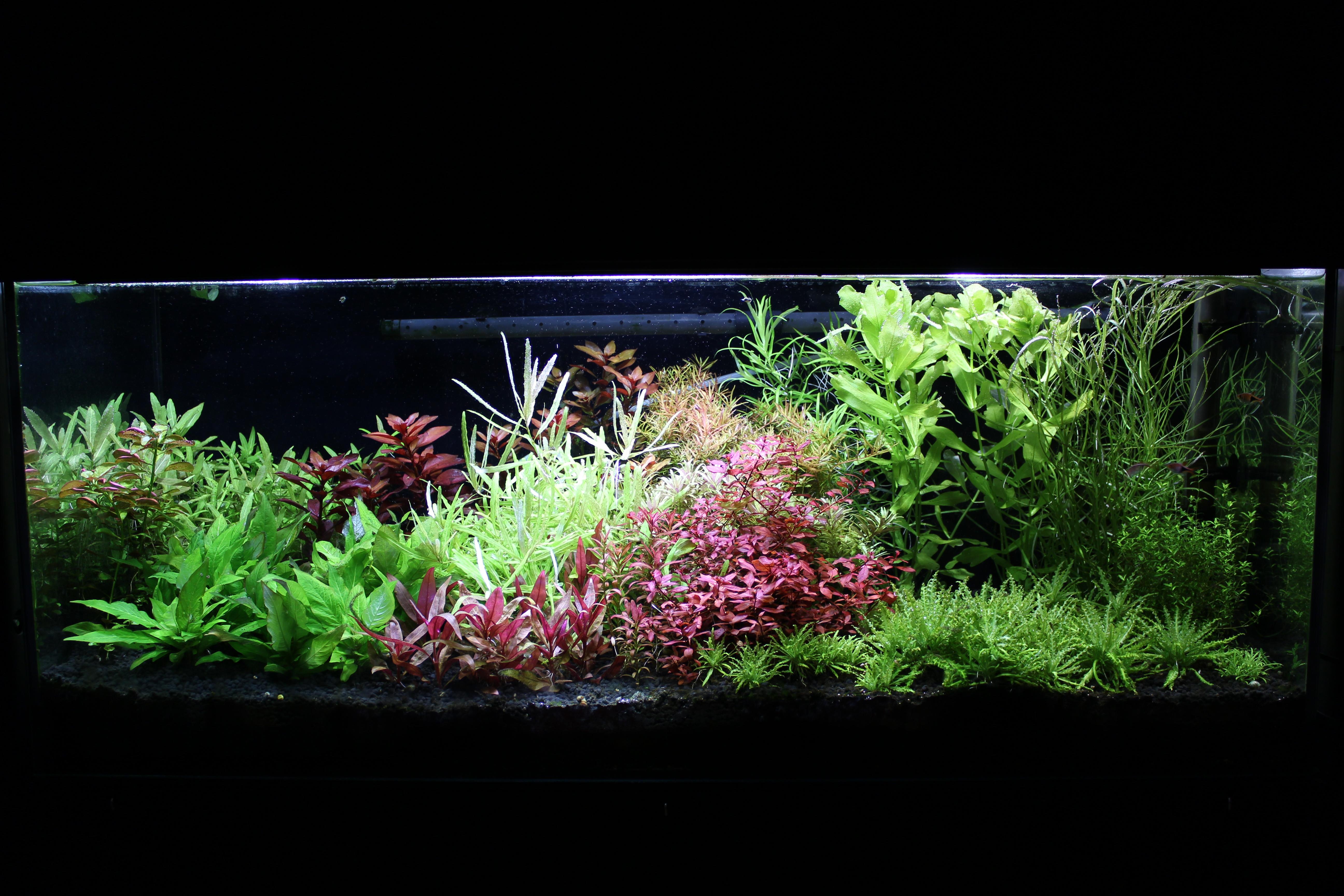 yokuchi soil + aquagrower